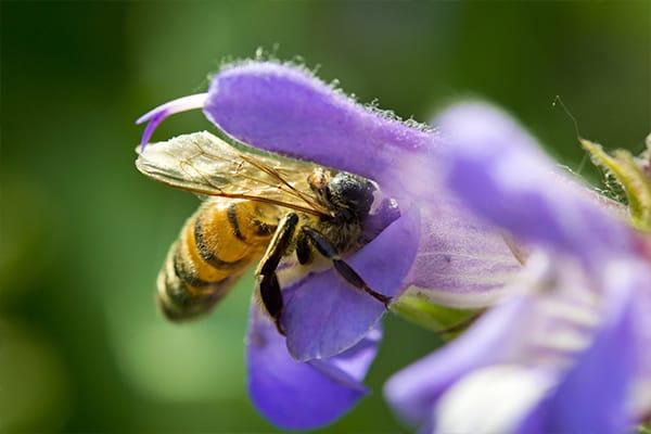 Benefits - Increased Biodiversity