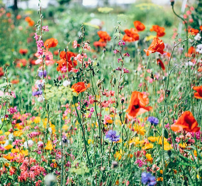 homepage-meadow