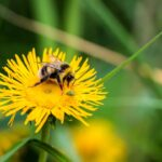 An Ode to Dandelions