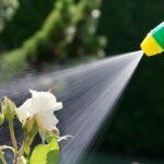 The Danger of Pesticides