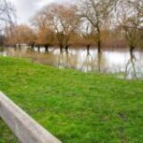 How to Reduce Flooding with Your Garden