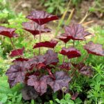 10 Plants for a Shaded Garden Corner