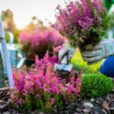 7 Native Flowers for your Garden