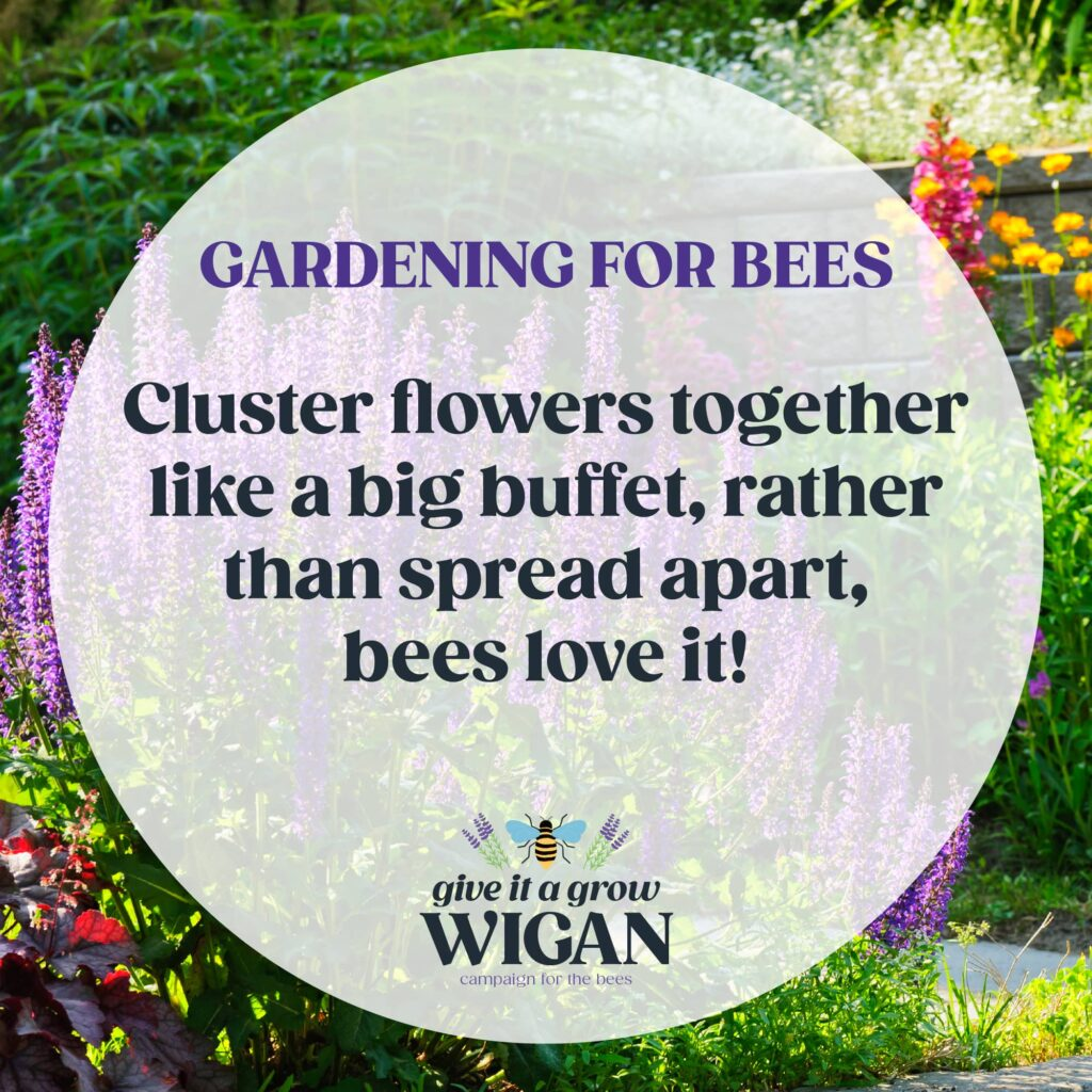 gardening for bees 02