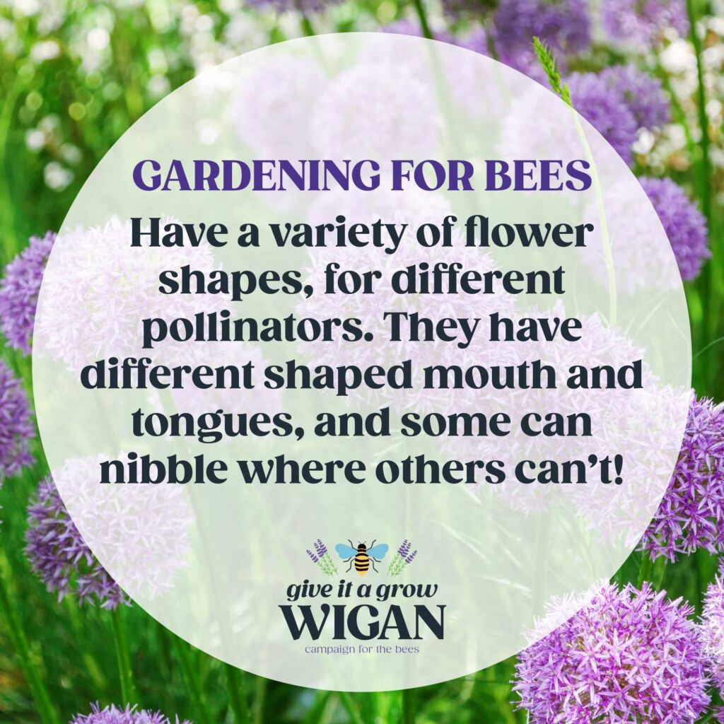gardening for bees 03