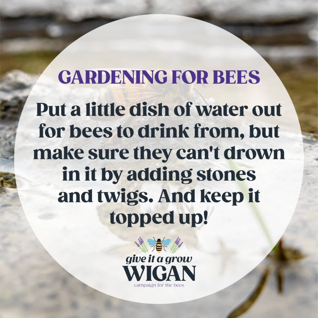 gardening for bees 04