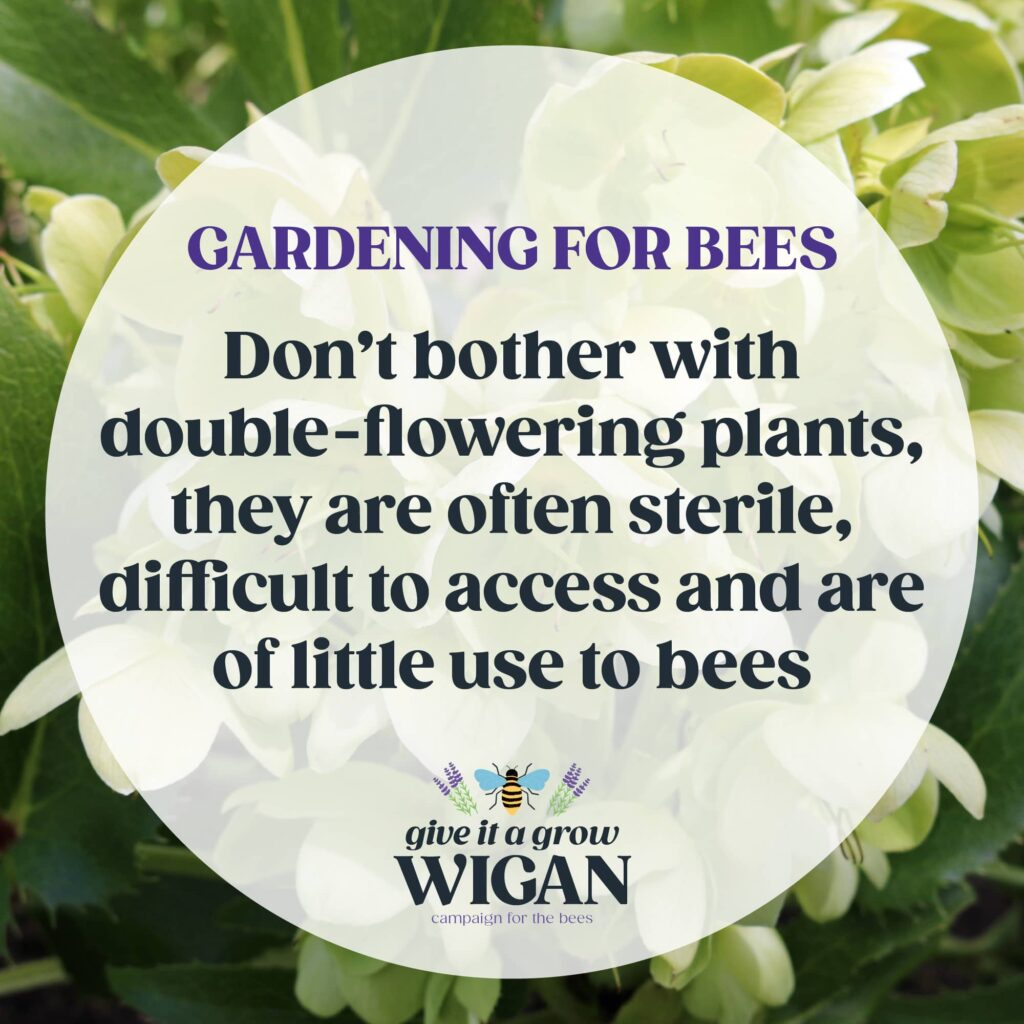 gardening for bees 05