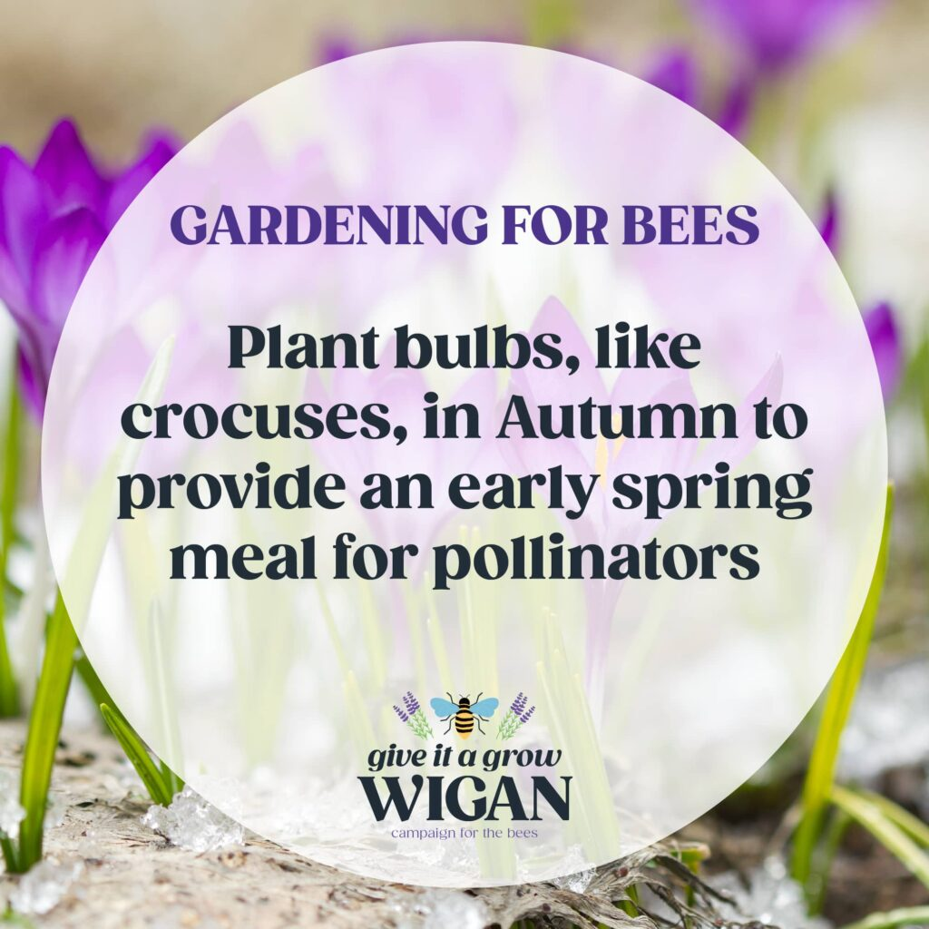 gardening for bees 06