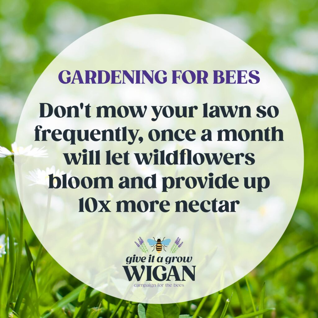 gardening for bees 07